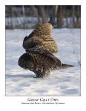 Great Gray Owl-008