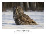 Great Gray Owl-010