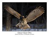 Great Gray Owl-013