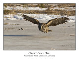 Great Gray Owl-016
