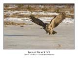 Great Gray Owl-017