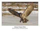 Great Gray Owl-061