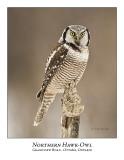 Northern Hawk-Owl-042