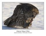 Great Gray Owl-022