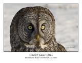 Great Gray Owl-024