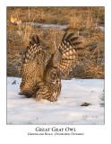 Great Gray Owl-025