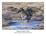 Great Gray Owl-026