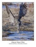 Great Gray Owl-028