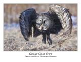 Great Gray Owl-032