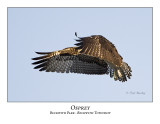 Osprey-010