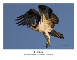 Osprey-011