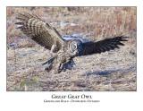 Great Gray Owl-035