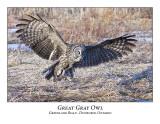 Great Gray Owl-036