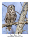 Great Gray Owl-039