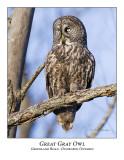 Great Gray Owl-040