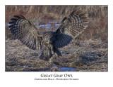 Great Gray Owl-041