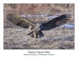 Great Gray Owl-043