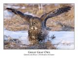 Great Gray Owl-052
