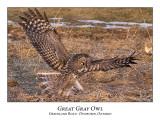 Great Gray Owl-054