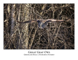 Great Gray Owl-059