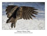 Great Gray Owl-018