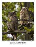 Great Horned Owl-010