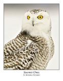 Snowy Owl-082