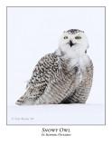 Snowy Owl-085