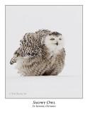 Snowy Owl-088