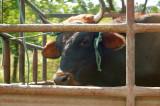 no bull.jpg