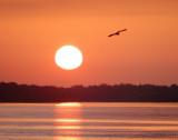 sunrise bird