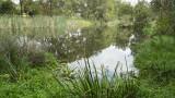 Wetlands025.jpg