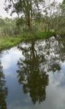 Wetlands026.jpg