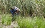 Wetlands030.jpg