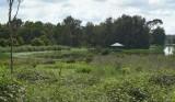 Wetlands031.jpg