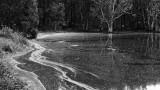 Wetlands035.jpg