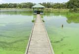 Wetlands042.jpg