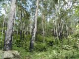 09_03_06 Wattagan Forest