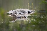 Reptile002.jpg