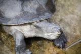 Reptile004.jpg