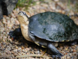 Reptile006.jpg