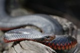 Reptile011.jpg