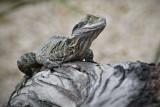 Reptile012.jpg