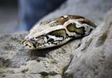 Reptile016.jpg