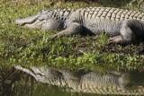 Reptile030.jpg