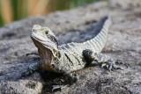 Reptile031.jpg