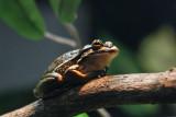 Reptile032.jpg