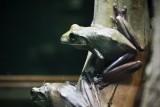 Reptile033.jpg