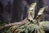 Reptile034.jpg