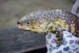 Reptile038.jpg